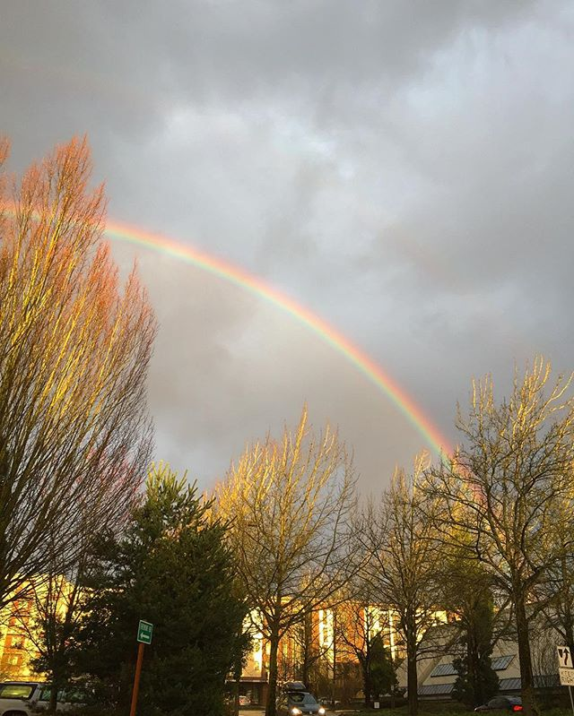 Now that was a glorious rainbow !
