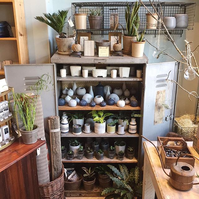 Half the fun of getting a new plant is finding the perfect home for it!  You'll find lots of our favorite ceramic planters, dishes and vases for plants of all shapes and sizes in our plant locker.