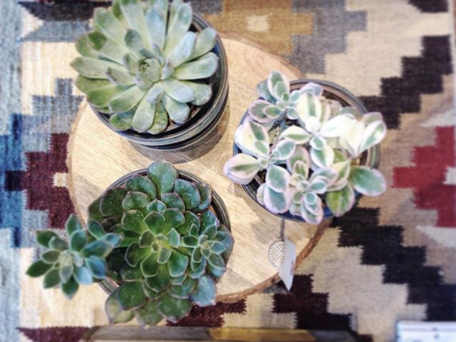 New crop of plants arrived in the shop today!