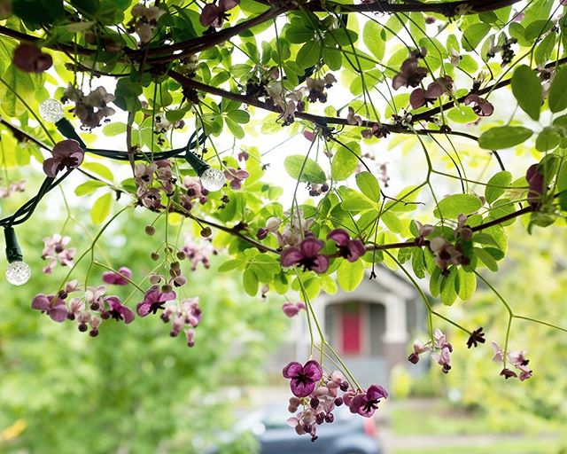 So many beautiful blossoms around town lately. We're loving this bout of warmth and sunshine!