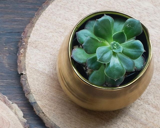We're all stocked up on our little succulents and planters today in case your desk needs a sweet new friend.