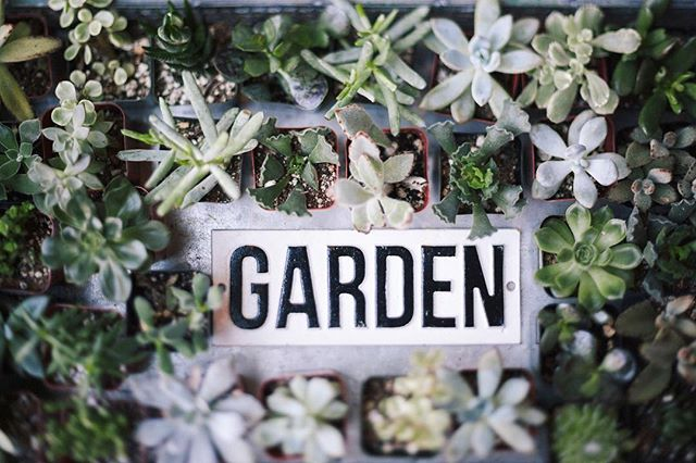 We love our wild little garden space here at the shop! . . . .