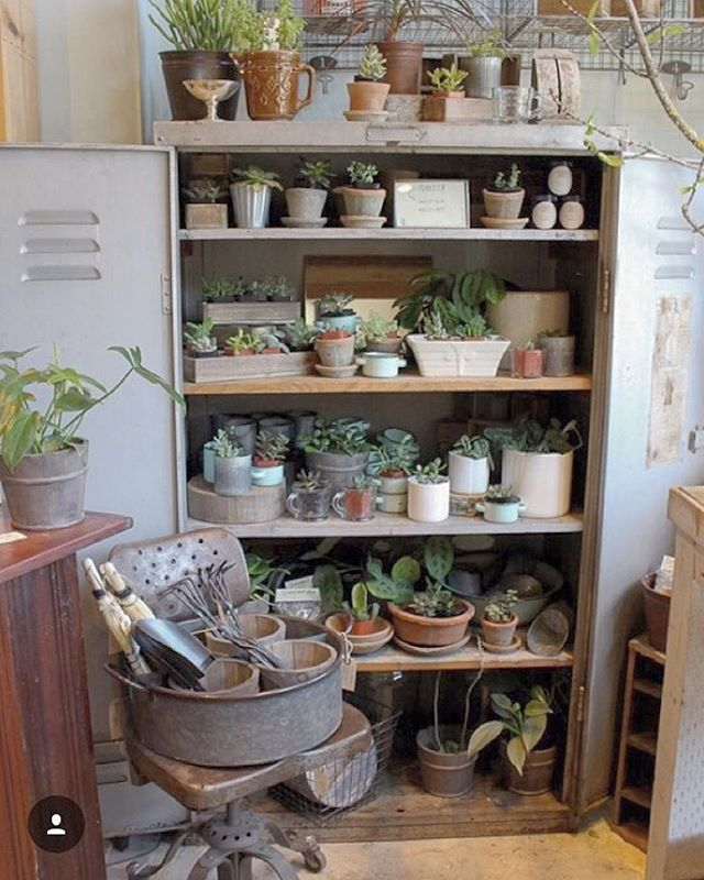 Your favorite plant cabinet is all spruced up and well stocked for the weekend.  Stop by and pick up a new green friend or two.⠀ photo by @honeykennedy⠀ .⠀ .⠀ .⠀ .⠀ .⠀ .⠀ honeykennedy