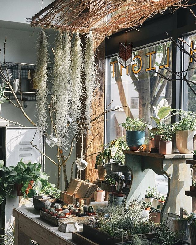 This corner of the shop looks even more magical with the spanish moss airplant ⠀ .⠀ .⠀ .⠀ .⠀ .⠀ .⠀