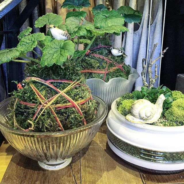 Sweet kokedama and native plant centerpieces by @mypoppyandfinch here @porchlightpdx all week long.