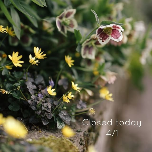 We are closed today, Sunday 4/1. So many pretty plants blooming out there today!  If you have a little extra time this weekend get out and take a walk around your neighborhood