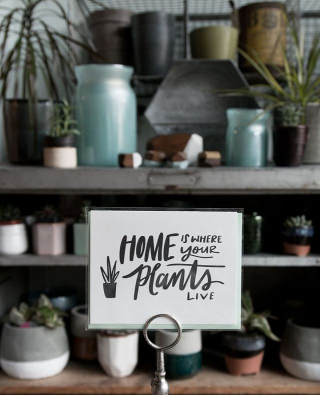 "A fresh batch of plants & planters is waiting for you at the shop! Stop by this weekend and find some new things to make your place truly a ""home""."