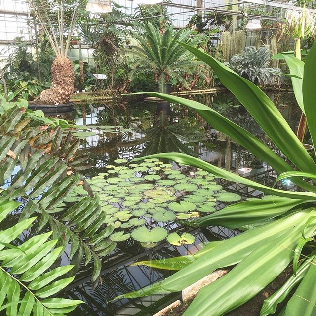 Dreaming about a visit to the Ghent Botanical Gardens in Belgium.