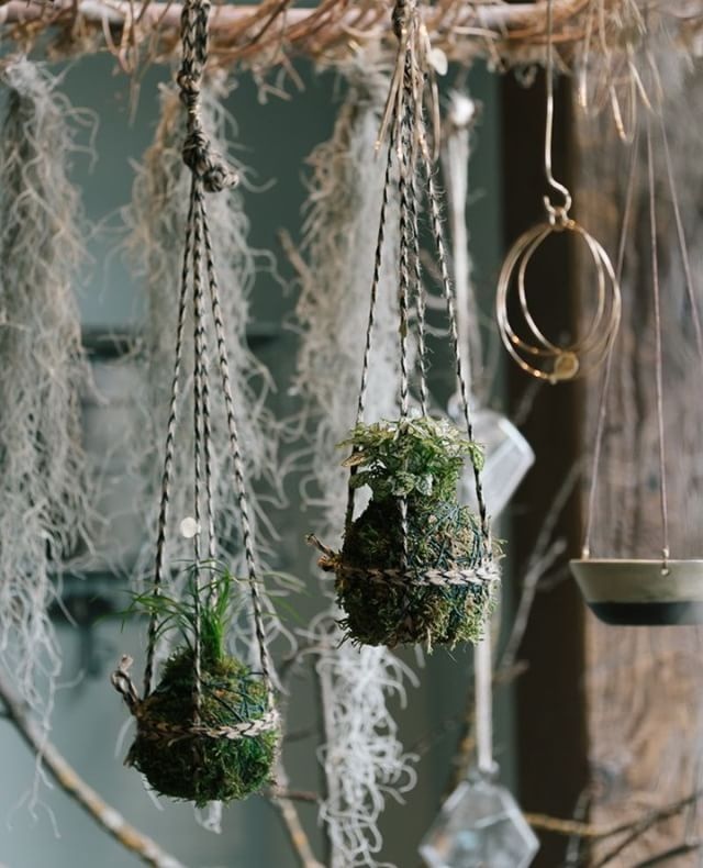 Sweet native plant kokedama by local designer Poppy and Finch.  Visit her open studio this Thursday to see more of her beautiful creations.  Details @mypoppyandfinch .