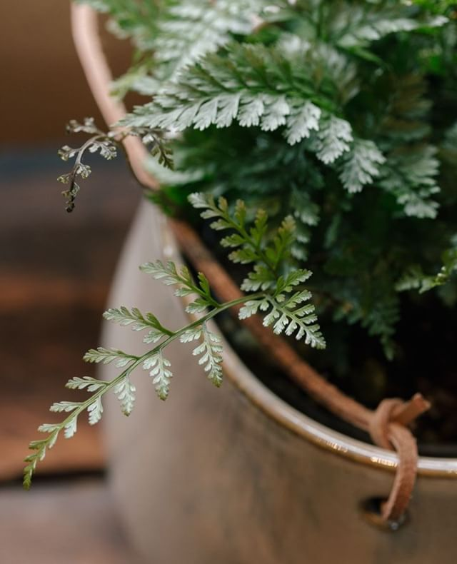 We think that ferns add some forest magic to your home