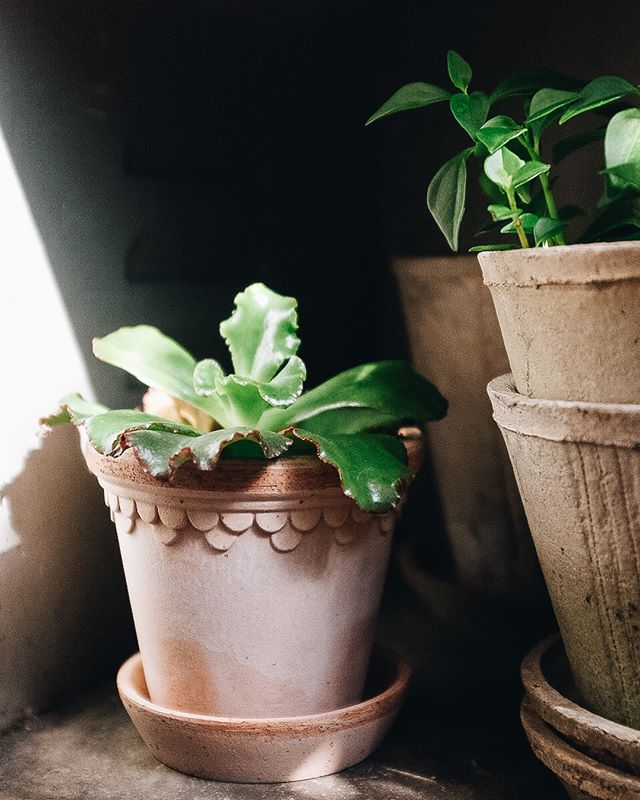 Have you seen our new terracotta planters? Made in Italy these beauties come with a saucer and have drainage holes. . . . . . .