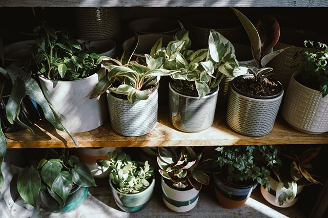 Our plant locker is fully stocked with cute pots! . . . . . .