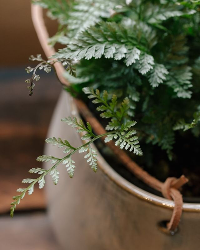 It's that time of year when you start cultivating your indoor garden.  Cozy up your house and clean the air with some new houseplants!