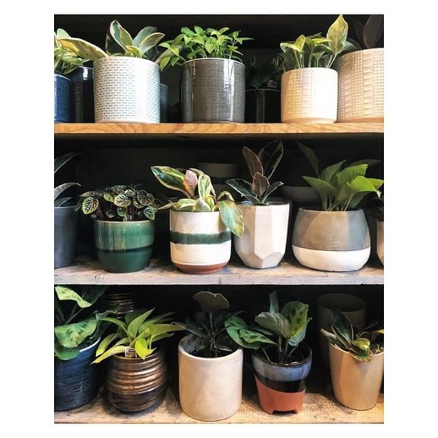 Love this sweet shot of our pot cabinet from @paperhouse !