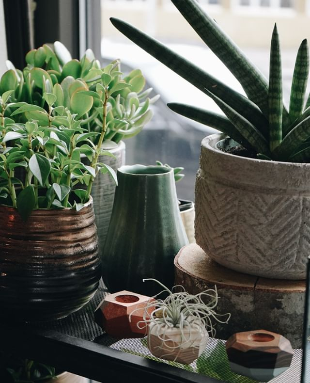 Never enough of plants and pots