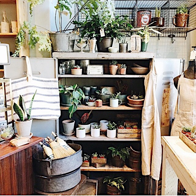Sweet photo of everyone's favorite plant cabinet by @sarahnicolehunt.