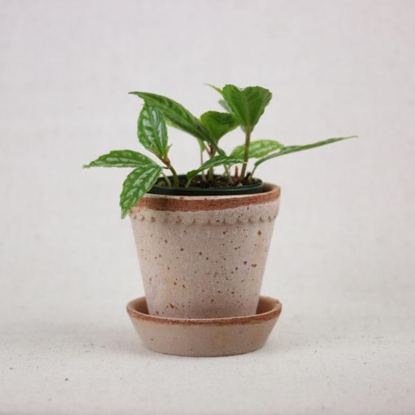 terracotta-scalloped-pot-pink