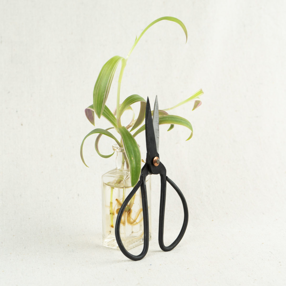 iron-garden-snips