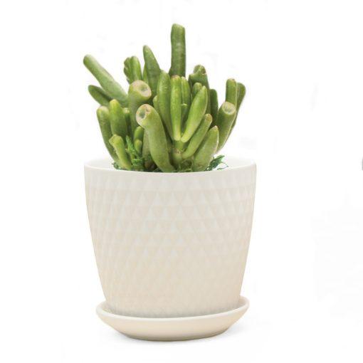 virago-pot-H-white