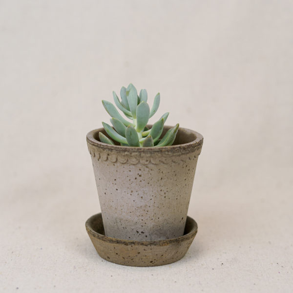 terracotta-scalloped-pot-grey