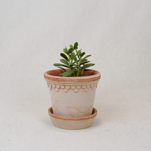 terracotta-double-scalloped-pot-pink